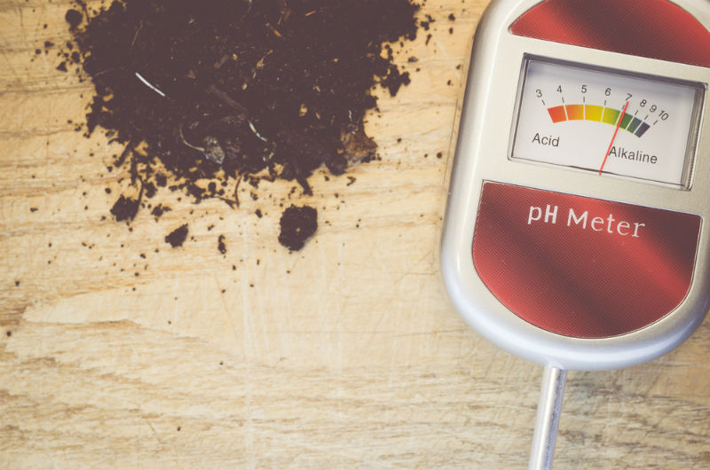 Understanding PH and Soil Acidity