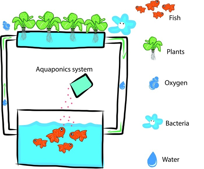 aquaponics grow bed