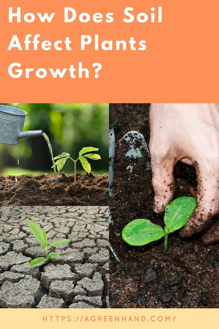 How Does Soil Affect Plant Growth? - A Green Hand