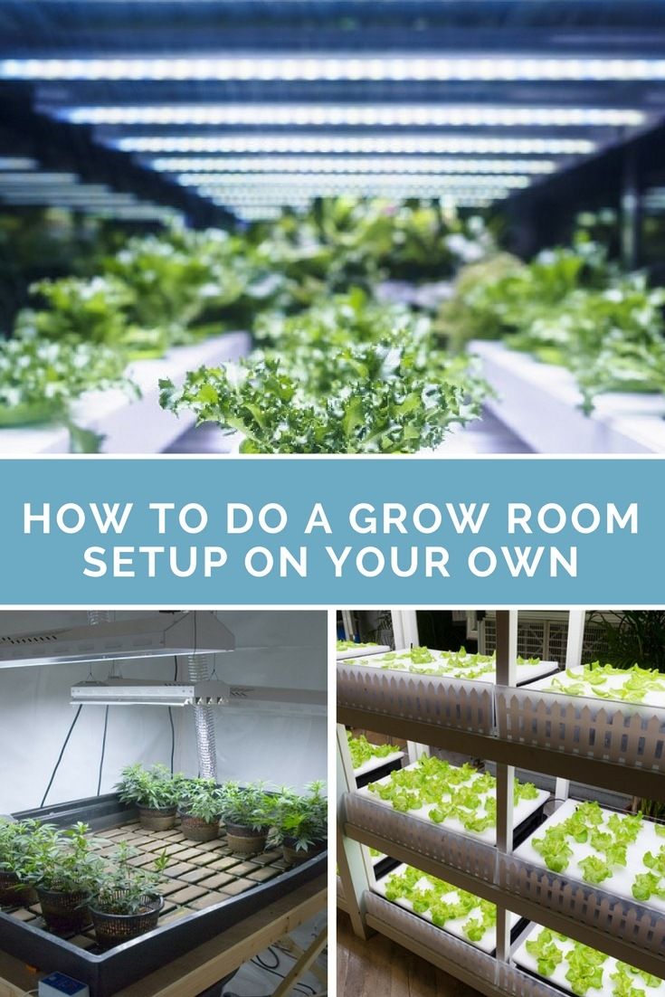 Now, having your own grow room will take time due to extensive planning. Still, this is better than making unwise decisions that could hamper plant growth in the long run. Here, we'll guide you to making the best grow room setup for your indoor garden.​