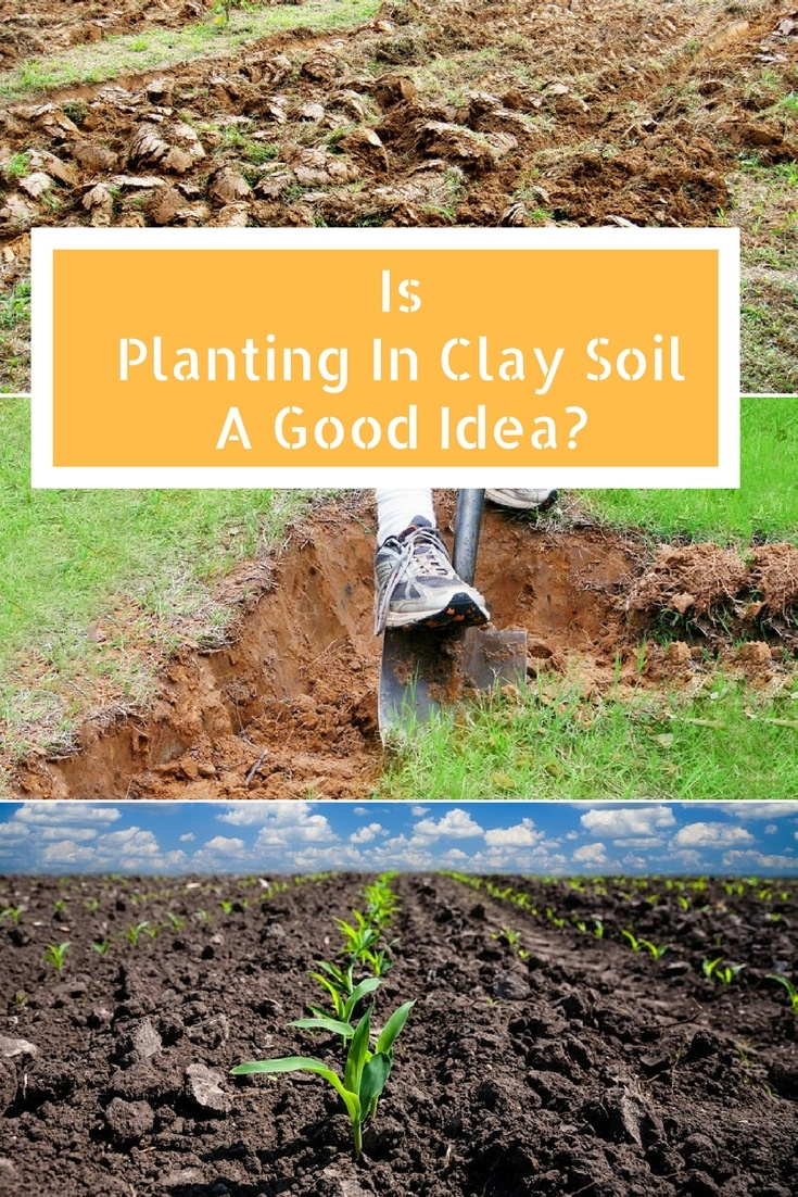 "Clay soil is often referred to as ""heavy soil,"" and it is any soil that contains 50% or more clay. ​So is planting in clay soil a good idea? As a gardener with many years of experience, I can tell you with certainty that there is no straightforward answer to this question. #claysoil #plantinginclaysoil #agreenhand"
