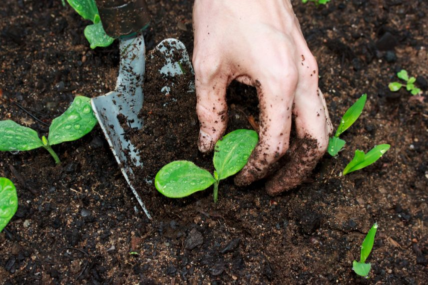 difference between soil and dirt