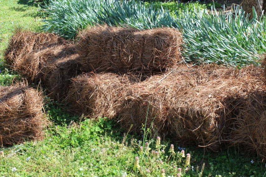 pine straw mulch pros and cons