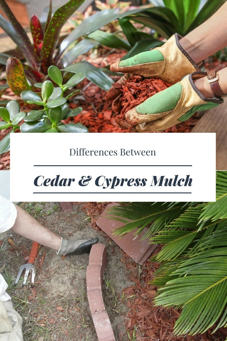 Are you wondering about the difference of cedar versus Cypress mulch? Are you thinking of which one is better for your garden? Get to know their differences by reading the information provided below. #cedarvscypressmulch #mulch #cedarmulch #cypressmulch #agreehand