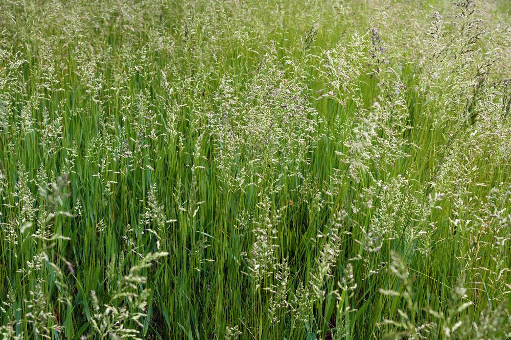 Which Is The Best Grass Seed For Clay Soil A Green Hand