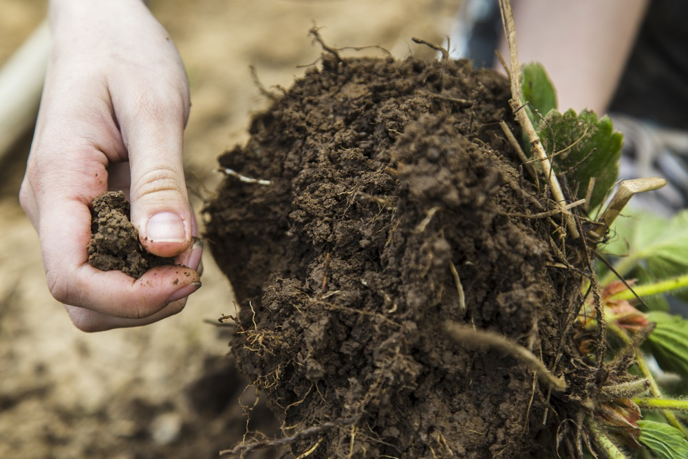 Is clay soil acidic understanding clay soil ph and how to for Where to find soil