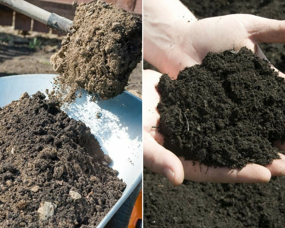 fill dirt vs topsoil