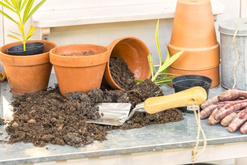 How To Get Rid Of Soil Mites