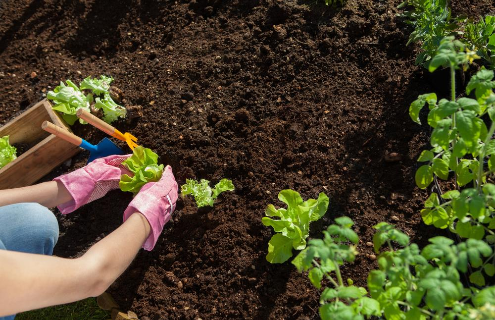 What Is Garden Soil? How To Make Topsoil