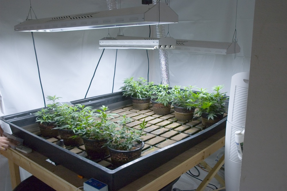 grow room setup