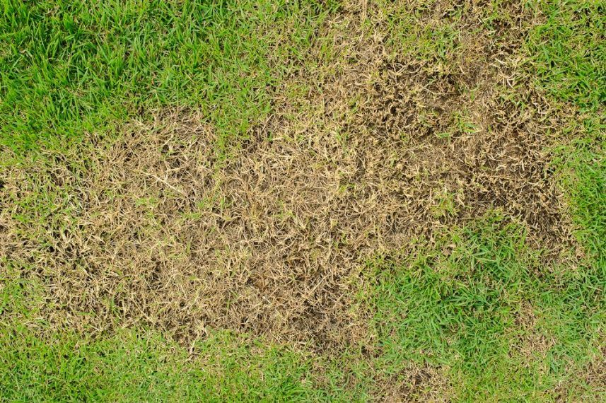 how to fix grass turning yellow after fertilizing