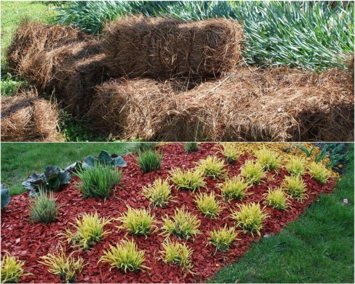 Differences Between Pine Straw And Mulch