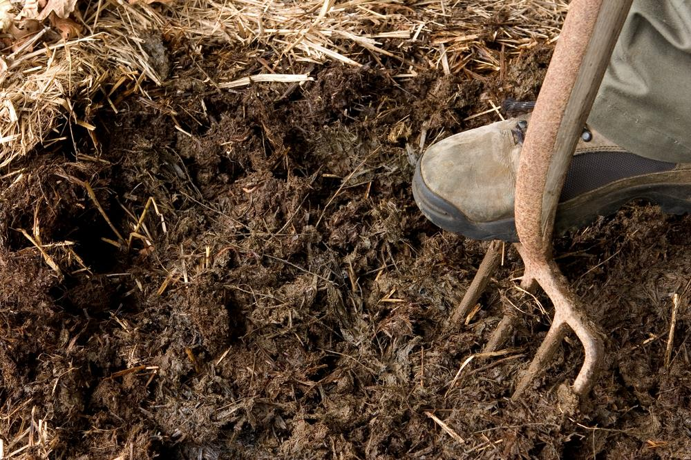 how to grow grass in clay soil in 5 simple steps