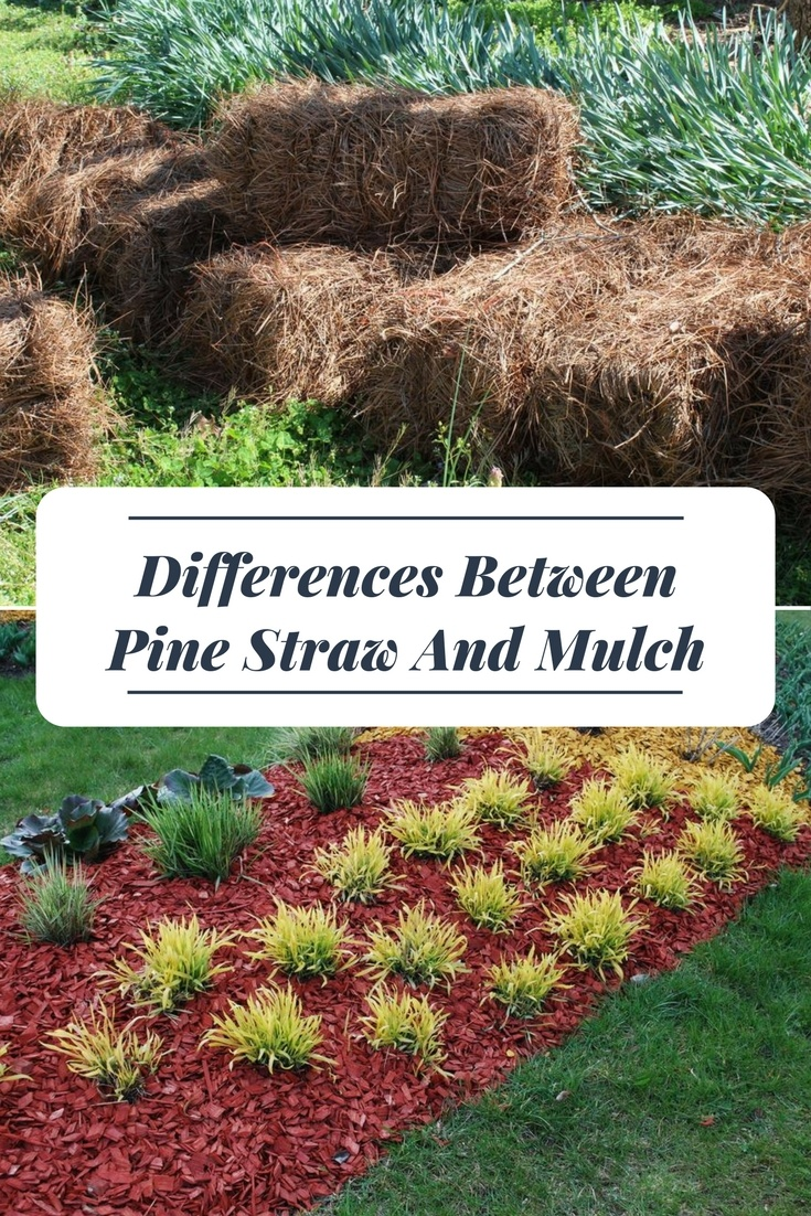 Differences Between Pine Straw And Mulch A Green Hand