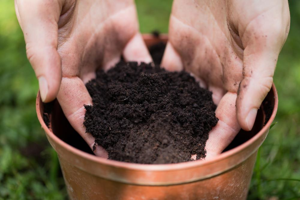 topsoil vs potting soil
