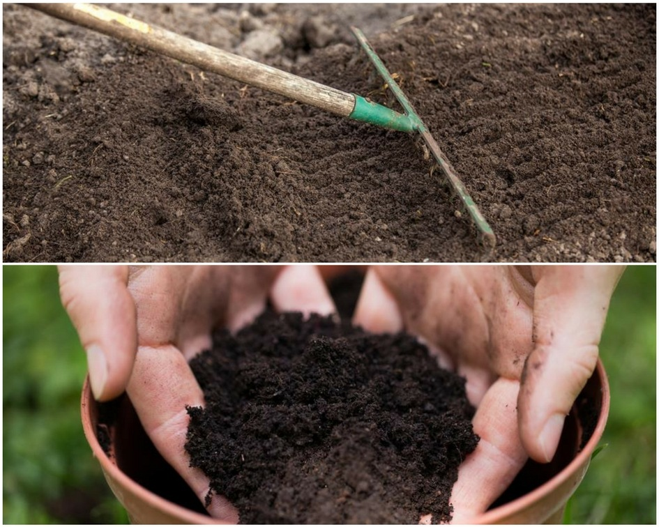 ​Topsoil Vs Potting Soil