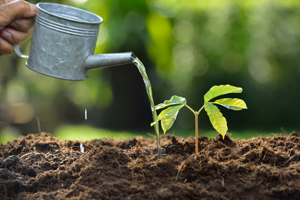 How Does Soil Affect Plant Growth