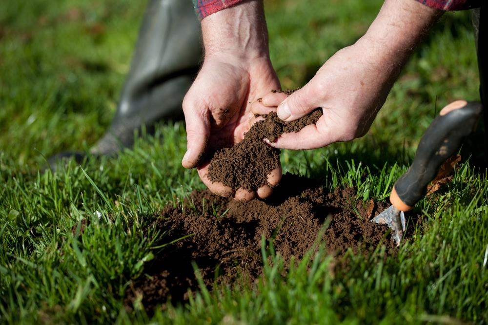 grow grass in clay soil