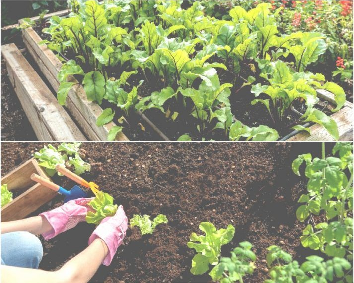 Topsoil versus garden soil which to use and why for Topsoil vs potting soil
