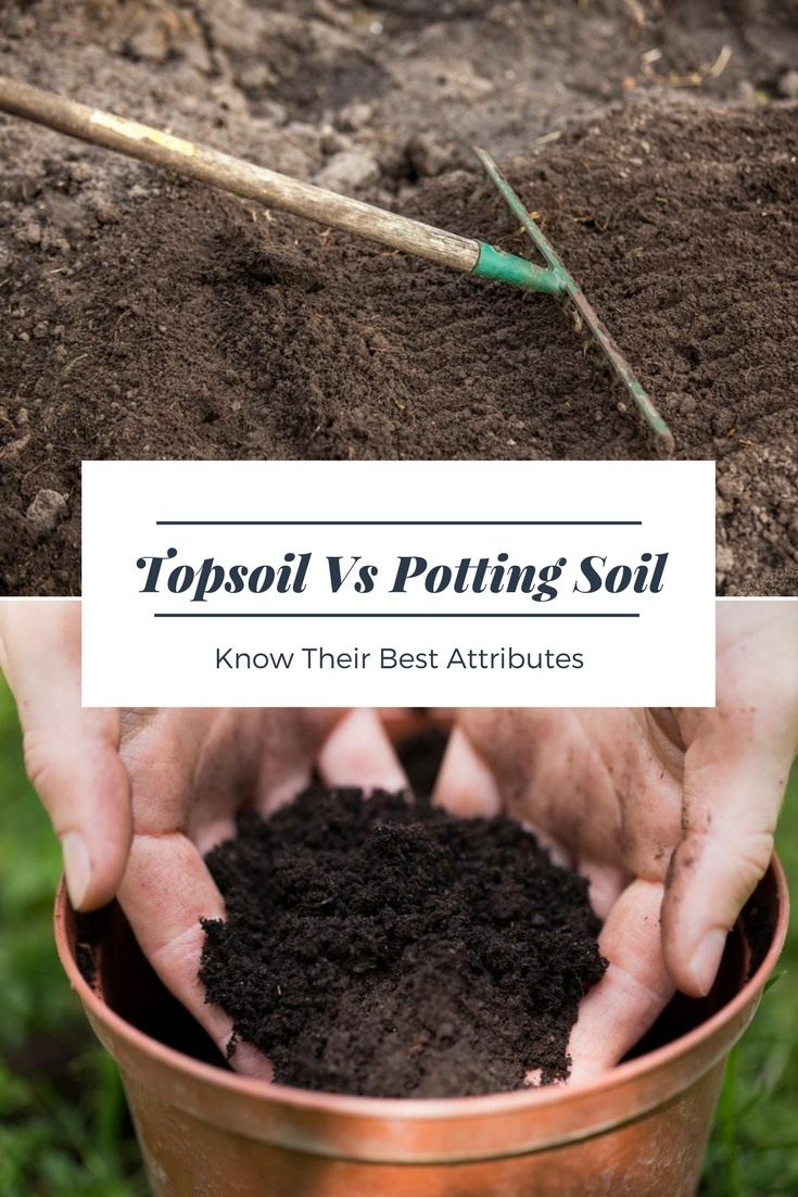 Topsoil Versus Potting Soil Know Their