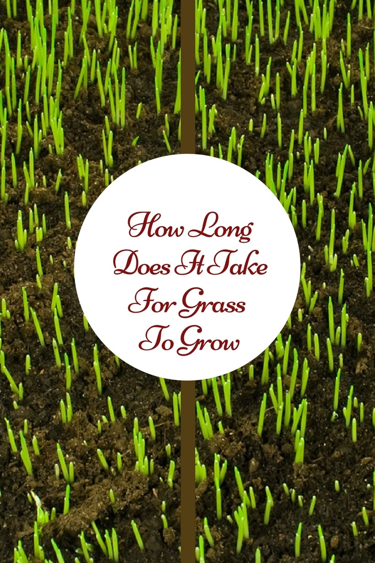 How Long Does It Take For Grass To Grow A Green Hand