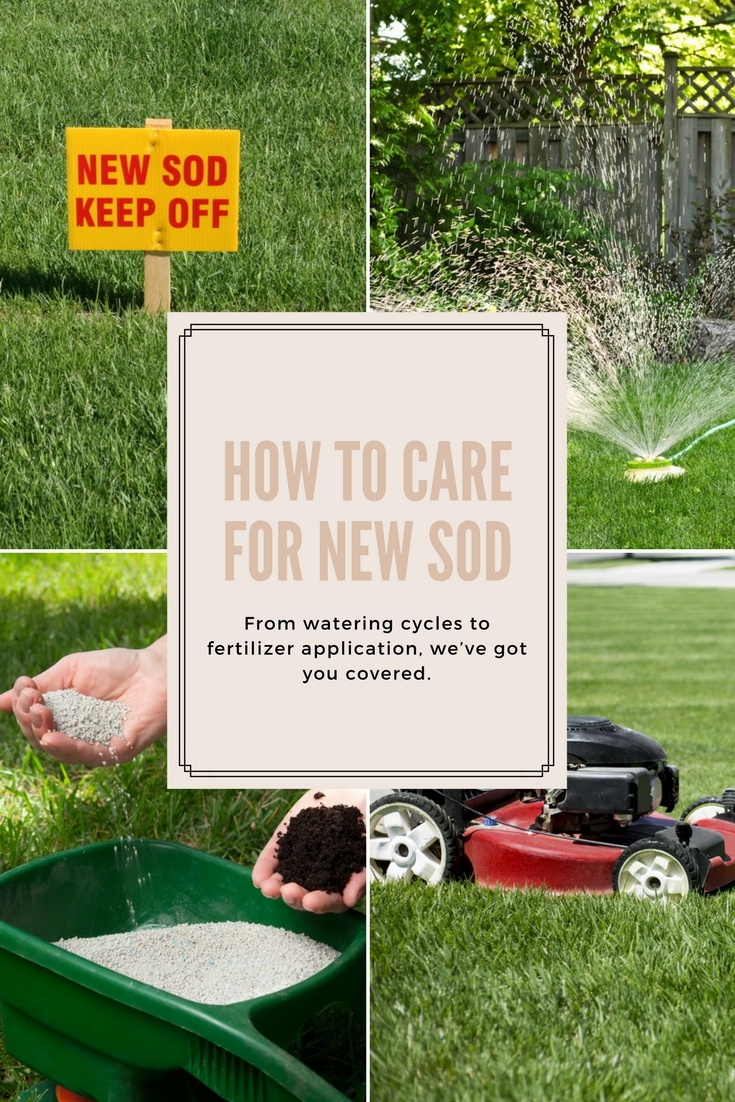 how to care for new sod a green hand