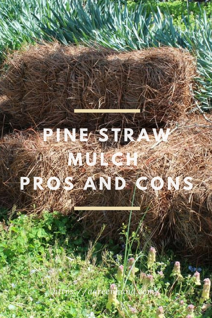 Pine Straw Mulch Pros And Cons A Green Hand