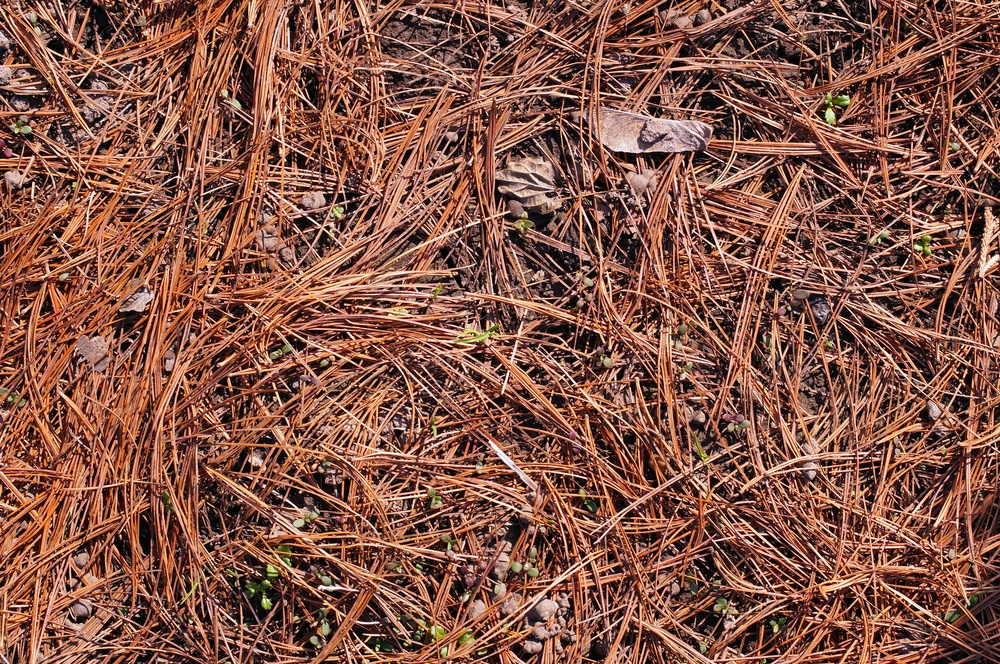 Alternatives To Mulch In Flower Beds