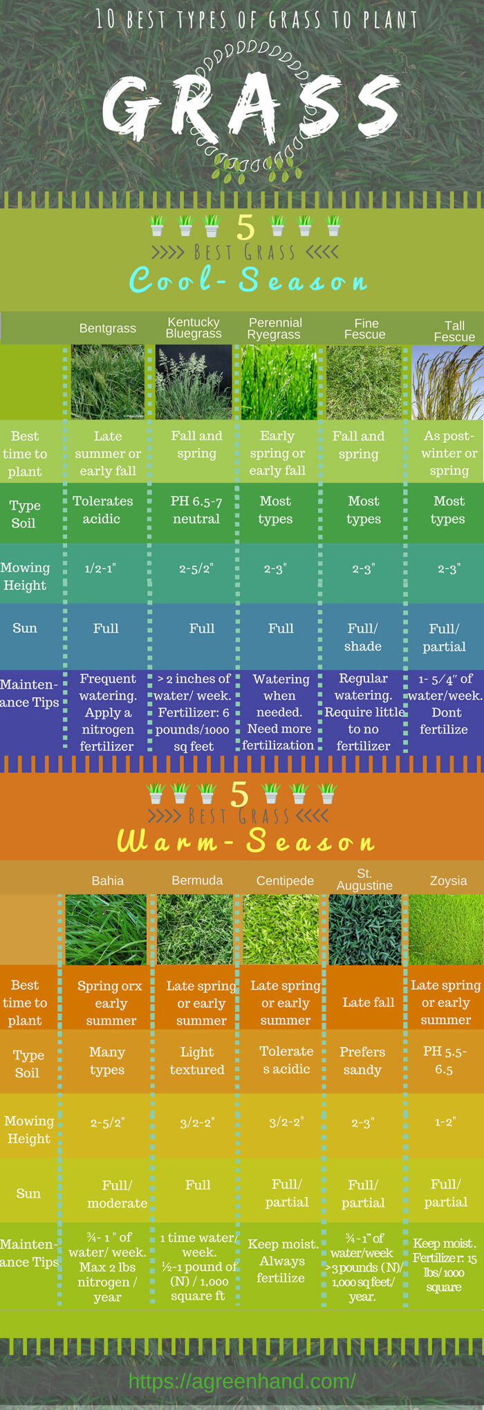 common types of grass infographic