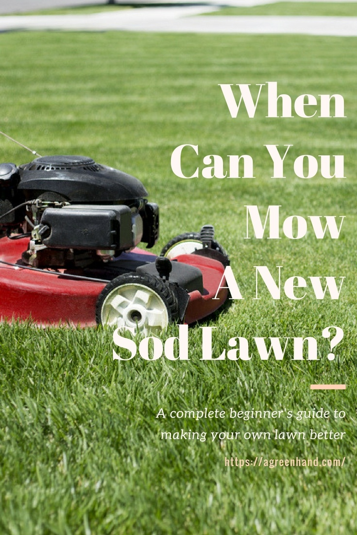 When Can You Mow A New Sod Lawn A Green Hand