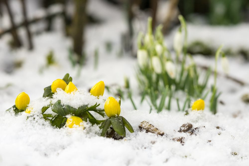 Flowers That Bloom In Winter