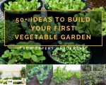 50+ Ideas To Build Your First Vegetable Garden