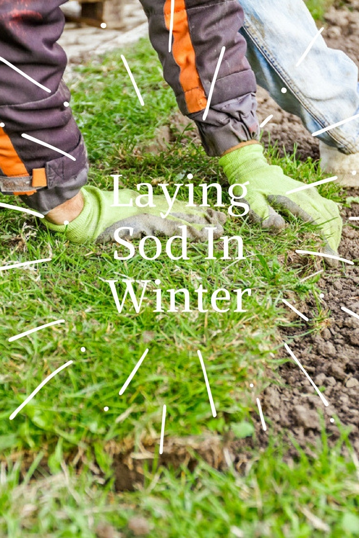 Laying Sod In Winter