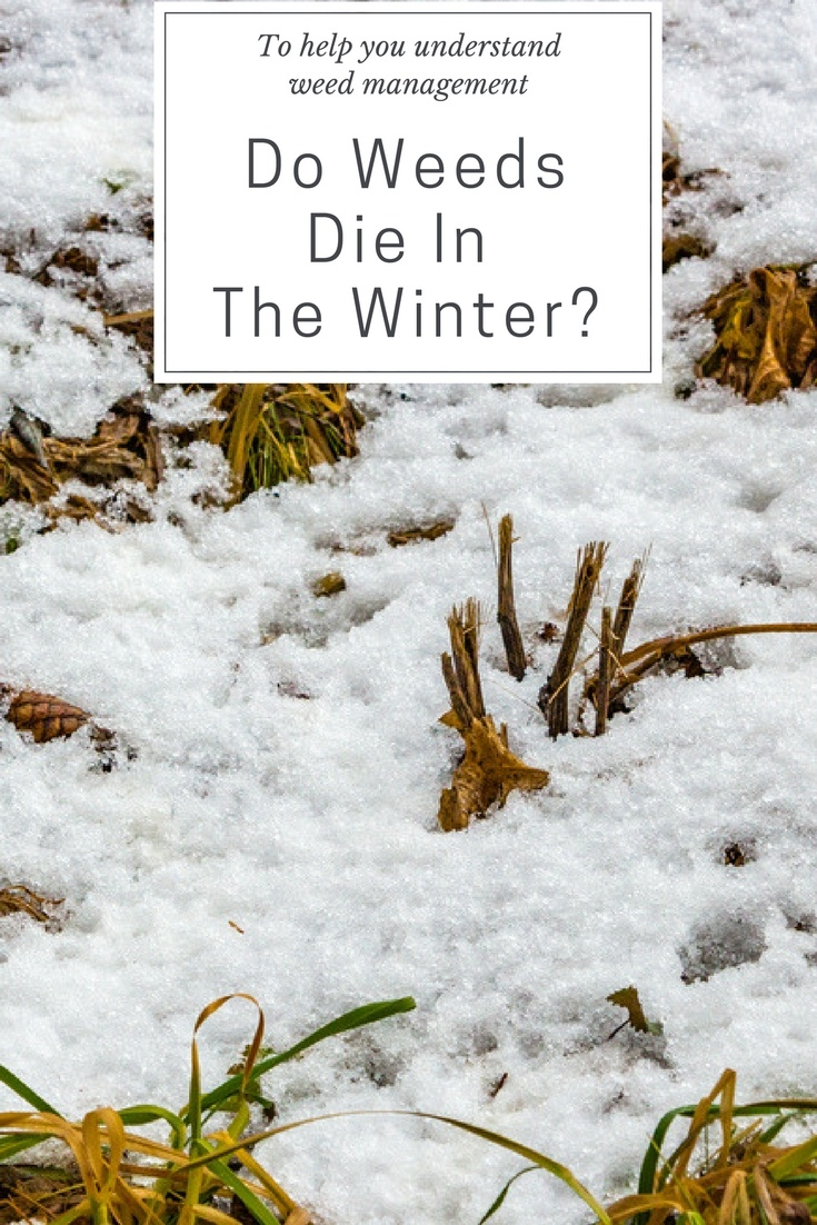 Do Weeds Die In The Winter