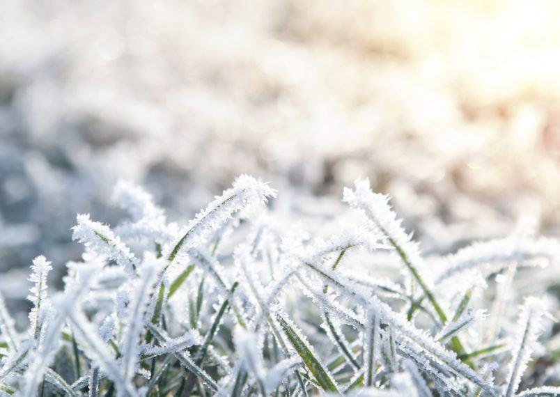 Do Weeds Die In The Winter