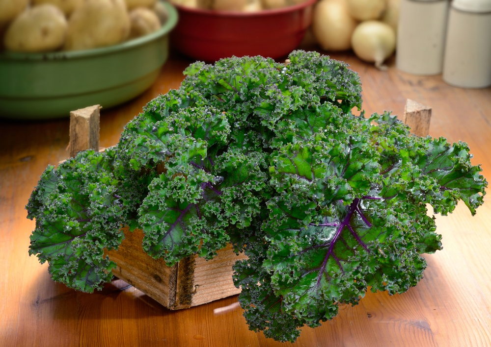growing kale in winter