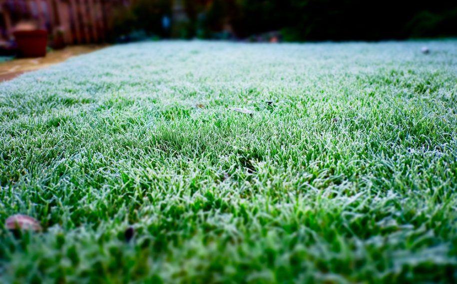 Watering New Sod In Winter