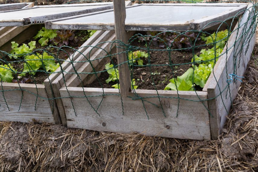 Easy To Build: DIY Cold Frame Gardening Steps - A Green Hand