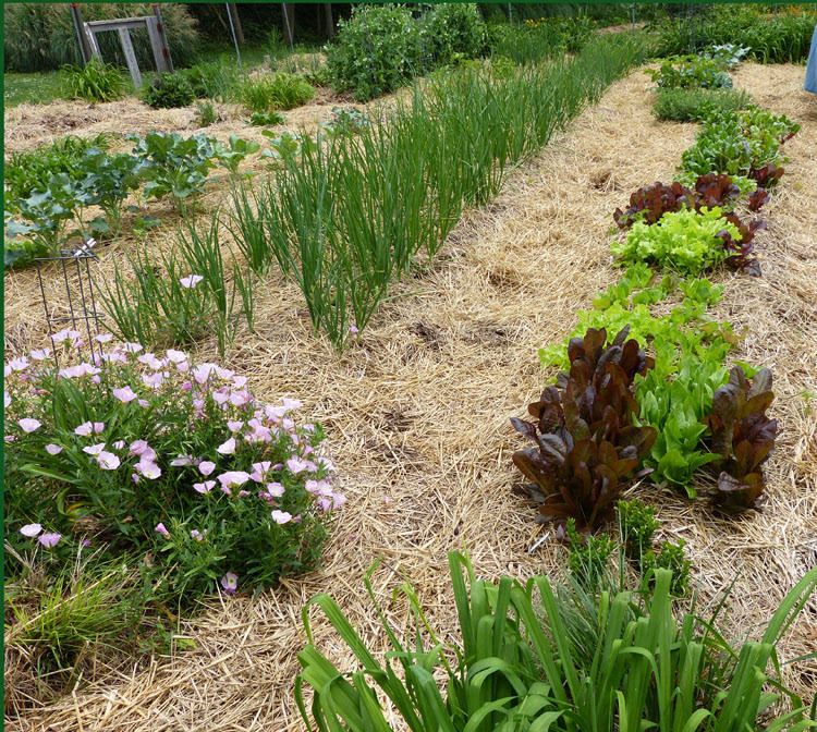 Creating Our First Vegetable Garden Advice Please: 50+ Ideas To Build Your First Vegetable Garden