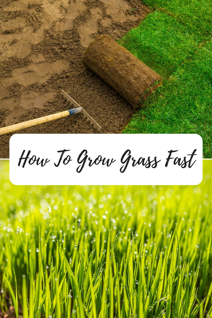 How To Grow Grass Fast A Green Hand