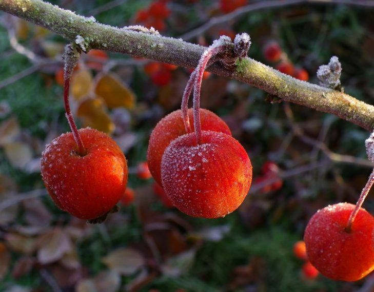 watering trees in winter