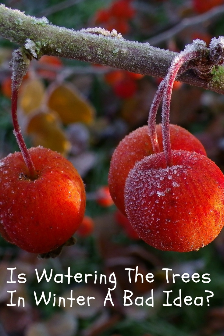 watering trees in winter