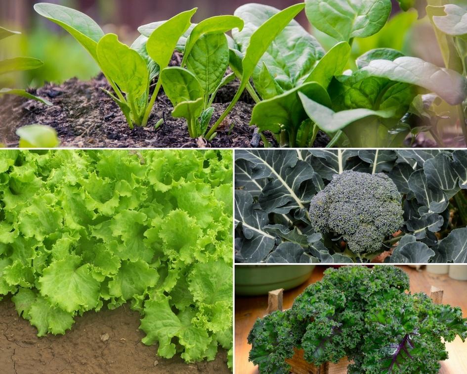 6 Healthiest Vegetables To Grow In Your Garden