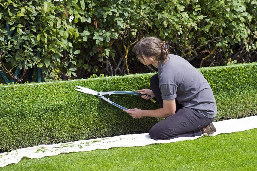 best hedge shear