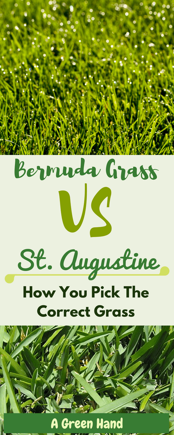 We are faced with a dilemma on choosing bermuda grass vs st augustine, the two most common grasses homeowners usually consider. To find the perfect fit, here are key pointers to consider so you're sure you're picking the correct grass. #bermudagrass #staugustinegrass #lawncare #gardening #agreenhand