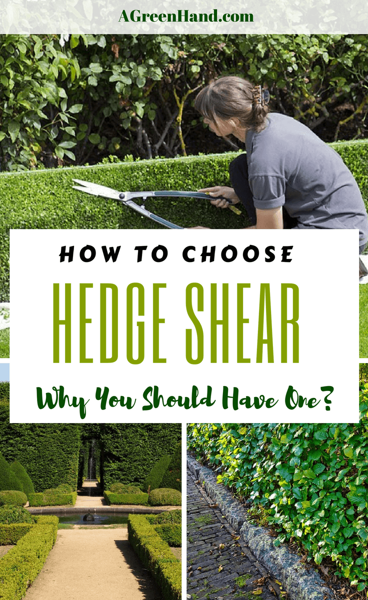 It can be a tedious job to shear hedges with your hand. It can be more difficult if you are not using the right hedge shear for your task. The best hedge shears are available in varied sizes and designs. Knowing which type of hedge shear to use will make things a lot easier. #gardening #springgardening #hedgeshear #landscape