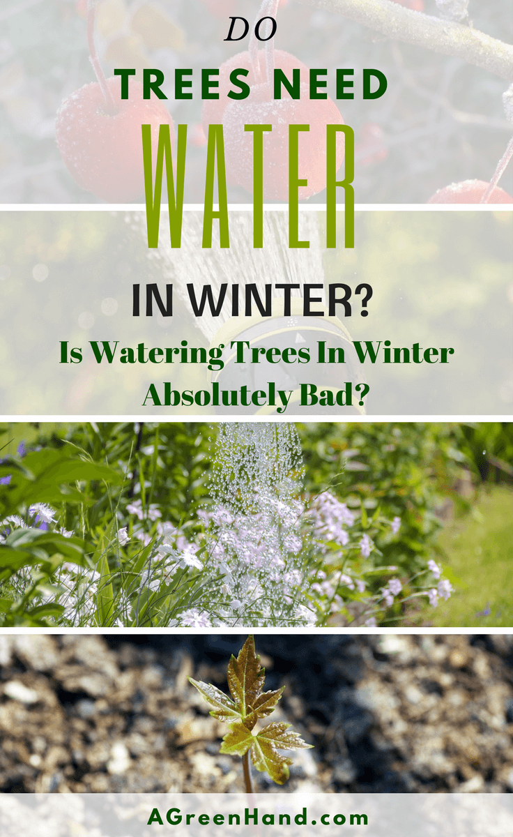 During the summer, we all water the trees regularly using sprinklers and other irrigation systems. However, the amount of water we give our trees is reduced as we approach the colder seasons. So, is watering trees in winter absolutely bad? #wintergardening #wateringtrees #sprinklers #fruittrees