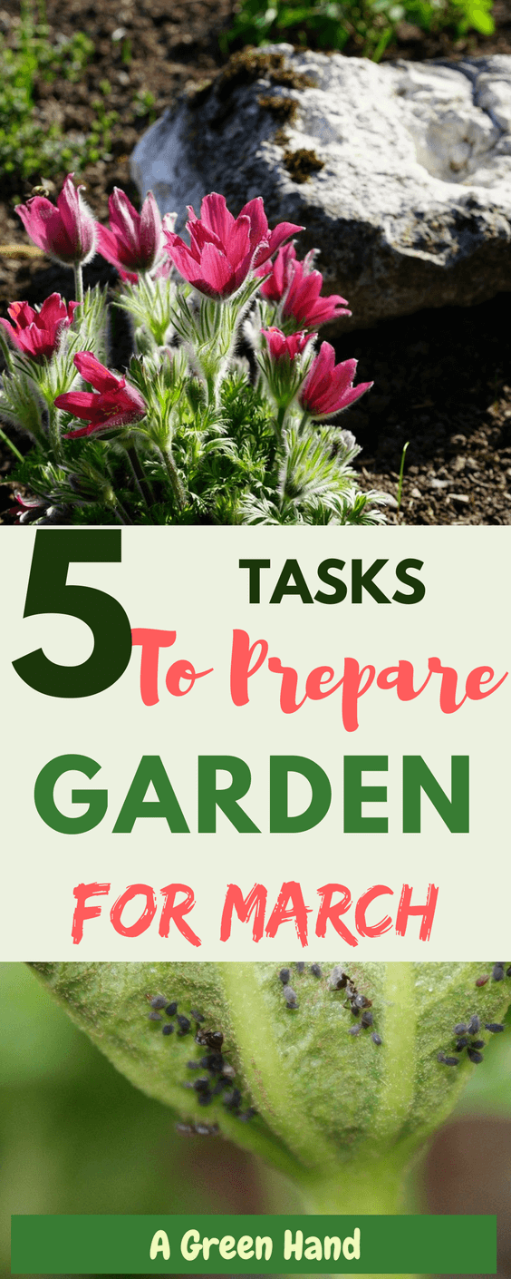 5 Gardening Tasks & Projects For March #springgarden #gardeningtasks #gardening #agreenhand