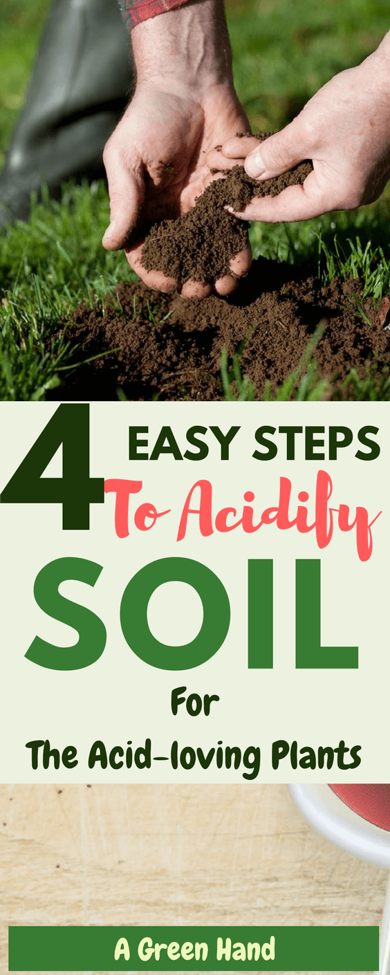 How To Acidify Soil in 4 Easy Steps. Soil acidification is necessary when dealing with particular types of plants as it creates the right growth environment and ensures that there is no deficiency of important compounds like iron. #soilcare #gardening #acidlovingplants #agreenhand