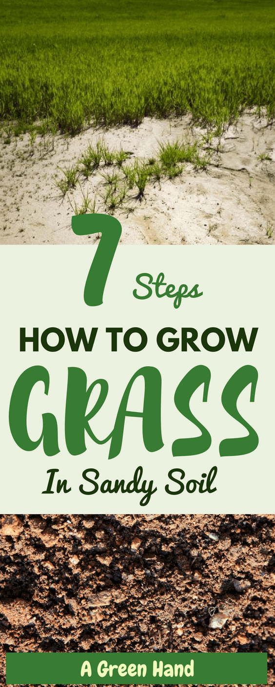 7 Steps on How To Grow Grass In Sandy Soil #lawncare #soilcare #sandysoil #gardening #agreenhand